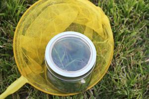 add-a-magnifying-glass-to-a-mason-jar-to-make-a-bug-jar